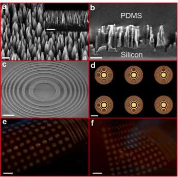 tiny-and-flexible-lenses-with-wide-field-of-view1